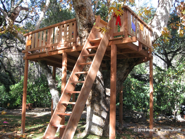 Custom Wooden Treehouse With Ladder Access Arcadia